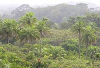 Guinée-Environnement : Le président de l'ONG SEG : «  Le réchauffement climatique est un problème crucial qui nous interpelle tous… »