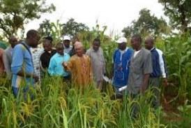 Agriculture-Dabola: 5.800 litres d'herbicides pour la campagne agricole 2015