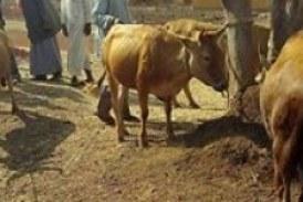 Lelouma : les autorités s'engagent dans la lutte contre le vol des bêtes