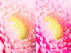 Obraz przed i po zwiększeniu nasycenia