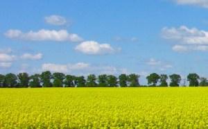 Kolor żółty powoduje pozytywne skojarzenia
