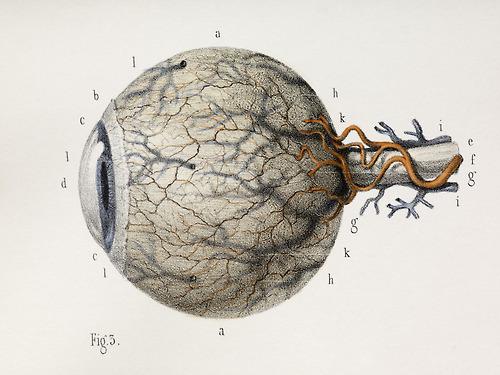 Eye anatomy, 1844 artwork