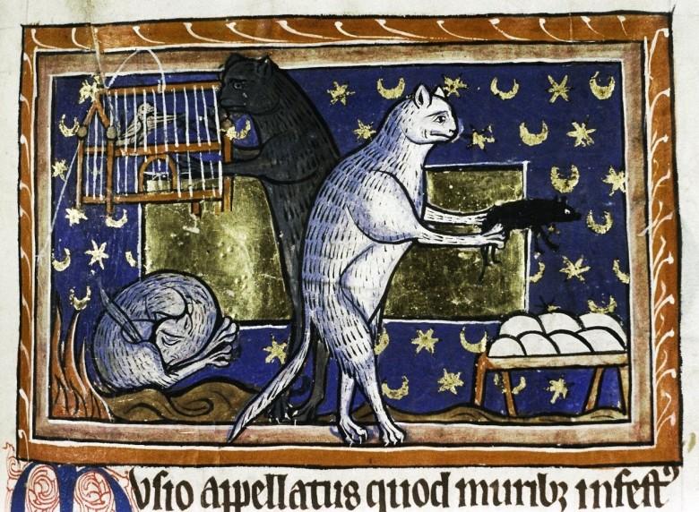 Gatti, bestiario medievale