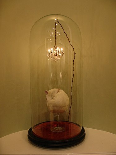 polly morgan taxidermy rat