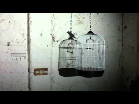Aurorameccanica la gabbia