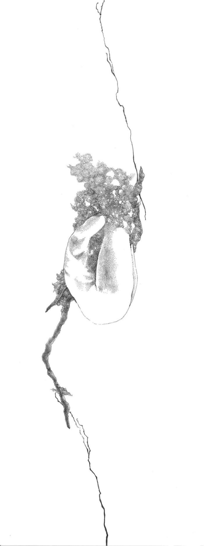 Enrica Berselli, Termogenesi di Crisalide, 30x40 cm, 2010