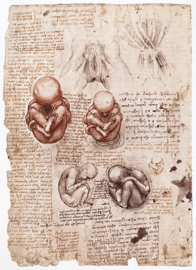 Leonardo da Vinci, Studio Anatomico 1510 ca.,Windsor, Royal Library