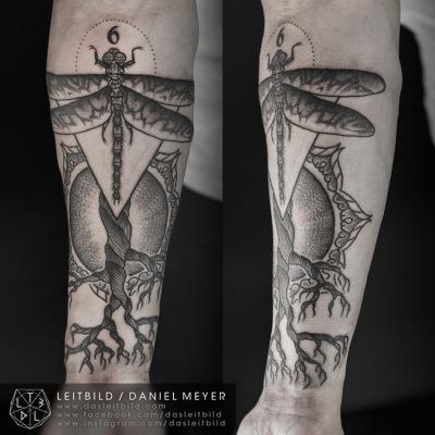 Daniel Meyer libellula