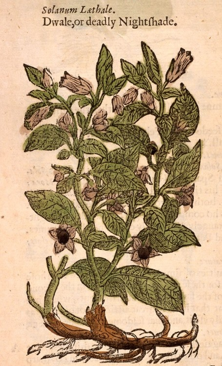 belladonna4
