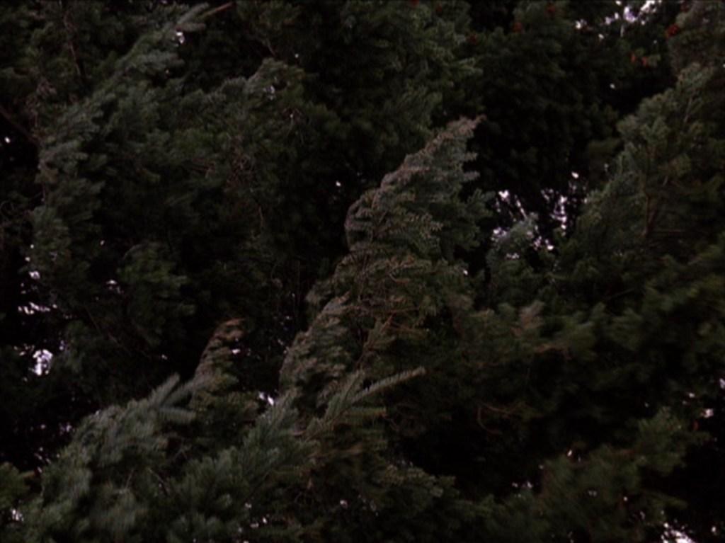 alberi, tpep11_074, via intwinpeaks.com
