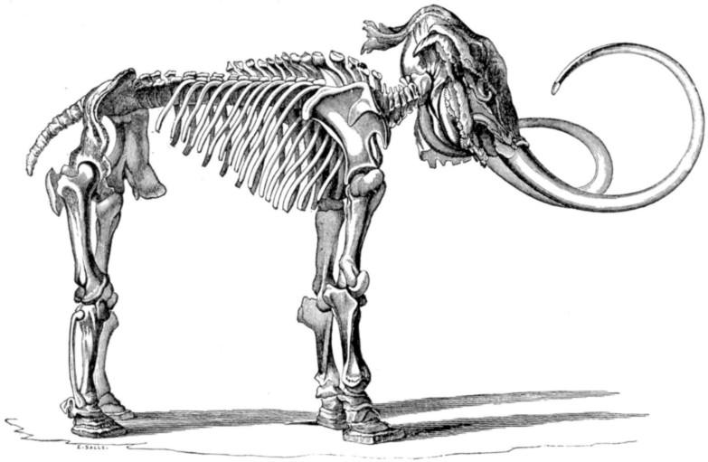 Illustration of the Adams mammoth's skeleton, 1815