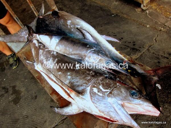 Catch of the day: swordfish, Varvakeios Market, Athens