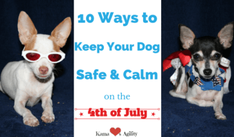 10 Ways to Keep Your Dog Calm & Safe on the 4th of July