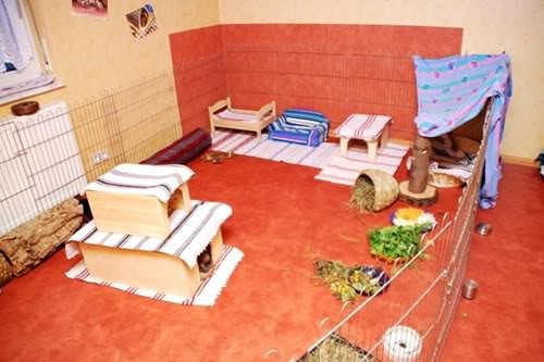 innenhaltung fotos kaninchenwiese. Black Bedroom Furniture Sets. Home Design Ideas