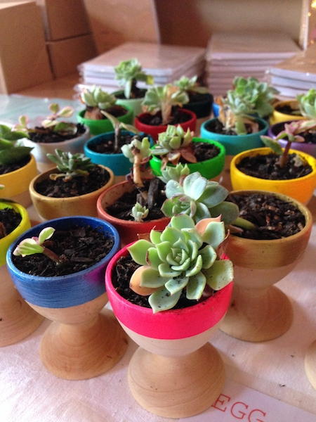 Little teeny tiny plants pots - or egg cups!!