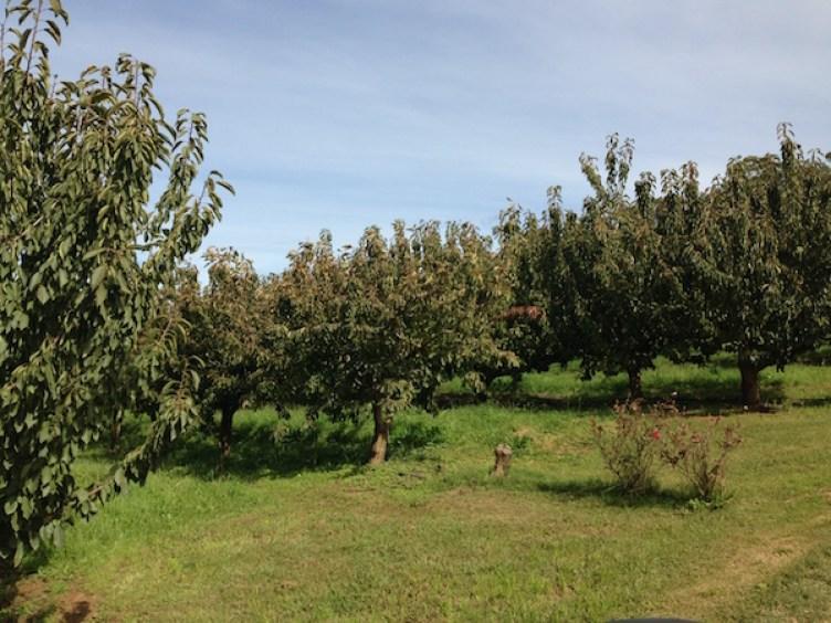 Fruit trees, Borrodell Vineyard, Orange Wine Tours