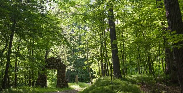 SJU woods.