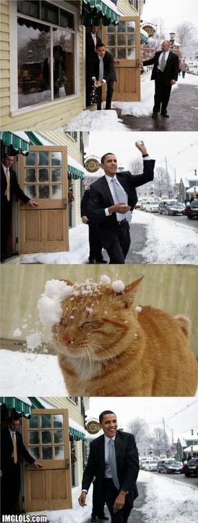 obama snowball, cat