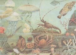 undersea_thumb