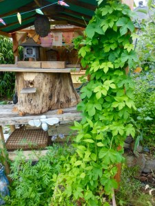 My log hive. Note the dark, round hole where bees come and go.