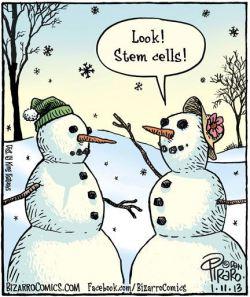 Snowman Stem Cells