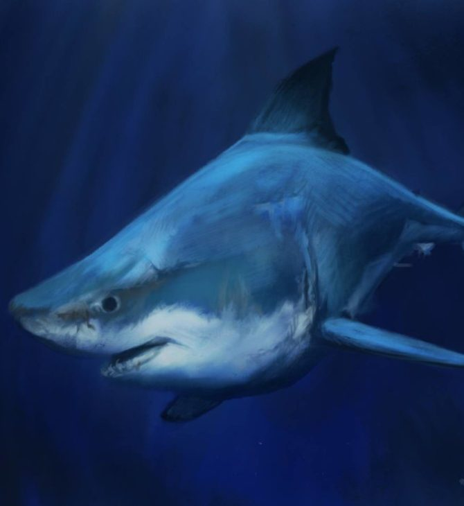 12-requin-ipad