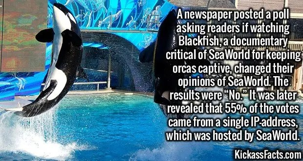 """2474 Blackfish Poll-A newspaper posted a poll asking readers if watching Blackfish, a documentary critical of SeaWorld for keeping orcas captive, changed their opinions of SeaWorld. The results were """"No."""" It was later revealed that 55% of the votes came from a single IP-address, which was hosted by SeaWorld."""
