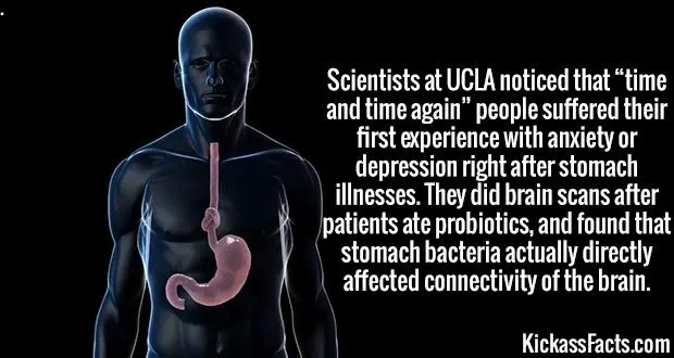 """3734 Stomach Illness-Scientists at UCLA noticed that """"time and time again"""" people suffered their first experience with anxiety or depression right after stomach illnesses. They did brain scans after patients ate probiotics, and found that stomach bacteria actually directly affected connectivity of the brain."""