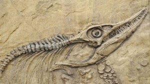 dinosaur-fossil