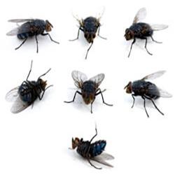 cluster-fliesIndex