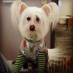Dogs-of-KiddNation-Bonsai-Stiffy