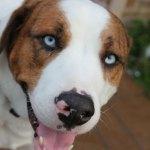 Dogs-of-KiddNation-Bruce
