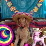Dogs-of-KiddNation-Charlie