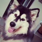 Dogs-of-KiddNation-Kaya