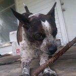 Dogs-of-KiddNation-Kiba