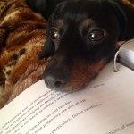 Dogs-of-KiddNation-Neauxla