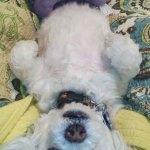 Dogs-of-KiddNation-Sasha