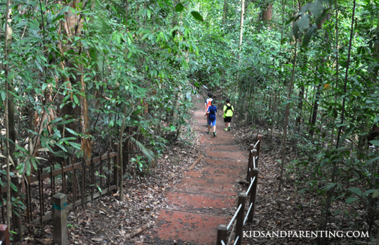 bukit-timah-path-down