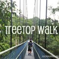 Tree-Top-Walk-title