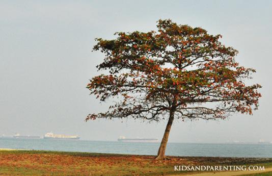 east-coast-park-trees