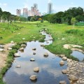 features-amk-bishan-pondgardens-river