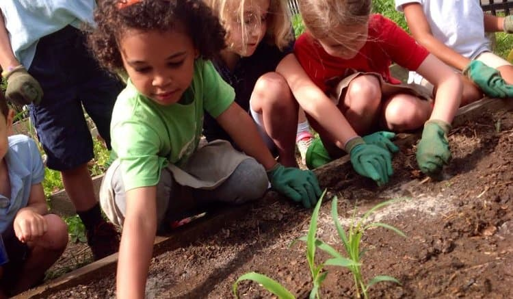 Whole Kids Foundation grows healthy students and schools with grant program