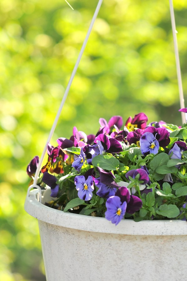 Planting Flower Boxes