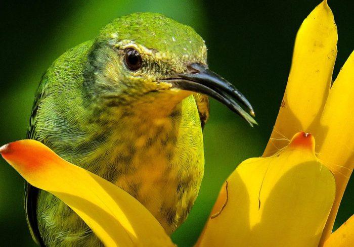 bird-800418_1280