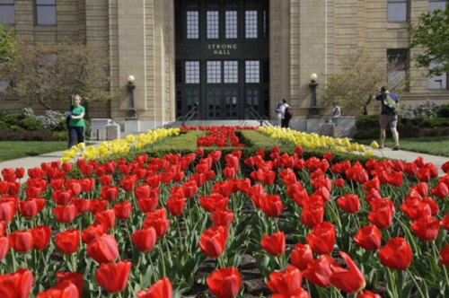 Tulips in front of Strong Hall at KU
