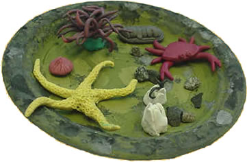 Make a mini-tidepool