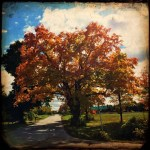 Maple Tree Rd Door Co fall doorcounty