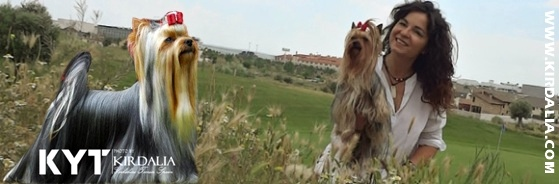 Kirdalia Criadores Yorkshire Terrier Madrid