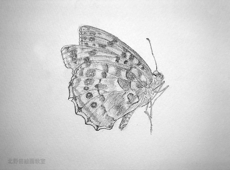 宮野ミケさん蝶々