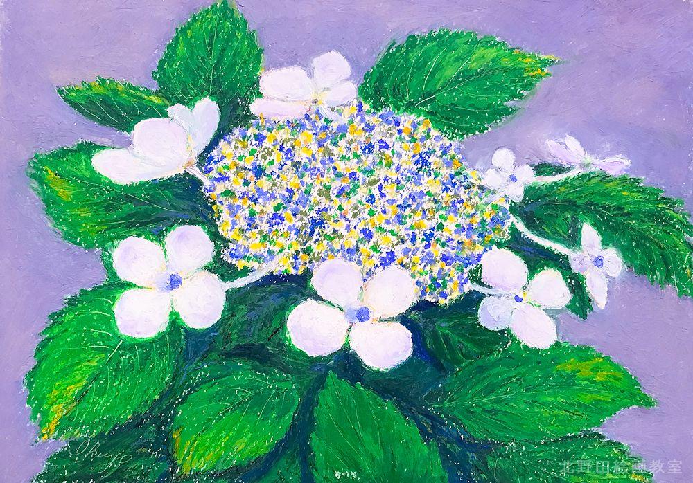 iさん紫陽花オイルパステル